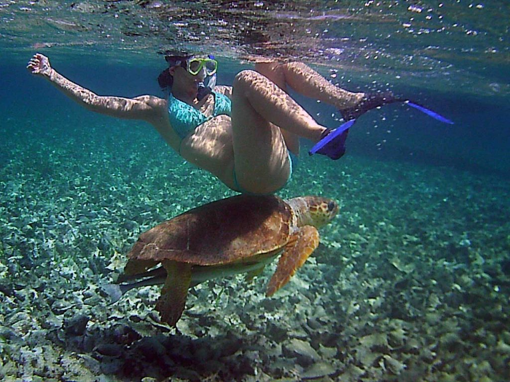 According to Des - Desiree Argentina with sea turtle