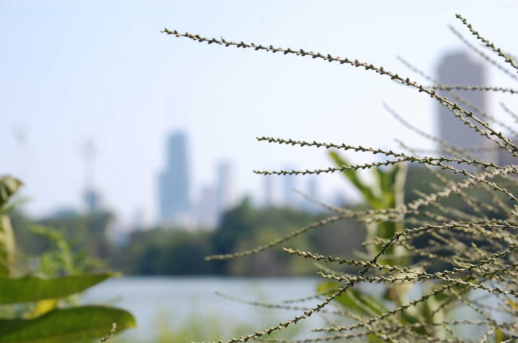 Views of Chicago skyline from Lincoln Park Zoo in Illinois