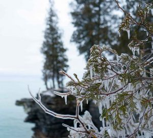 Icy tree - Cave Point Park Door County
