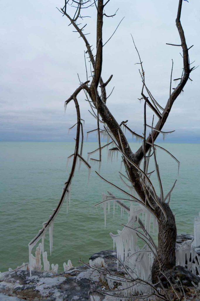 Icy treescape - Door County